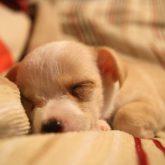 ぐっすり眠ってすっきり起きる!快眠のために気をつけたい5つのこと。